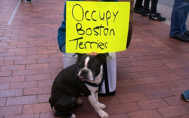 ob terrier How to get more involved in Occupy Boston